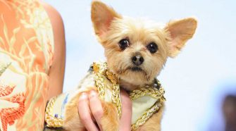 Feira Pet e Fashion Week Dog